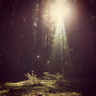 California Redwood Grove, Magic Moments. Guiding Light